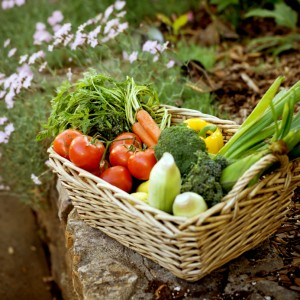 Why You Should Grow Your Own Vegetables